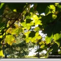 Sunlight captured through green tree leaves