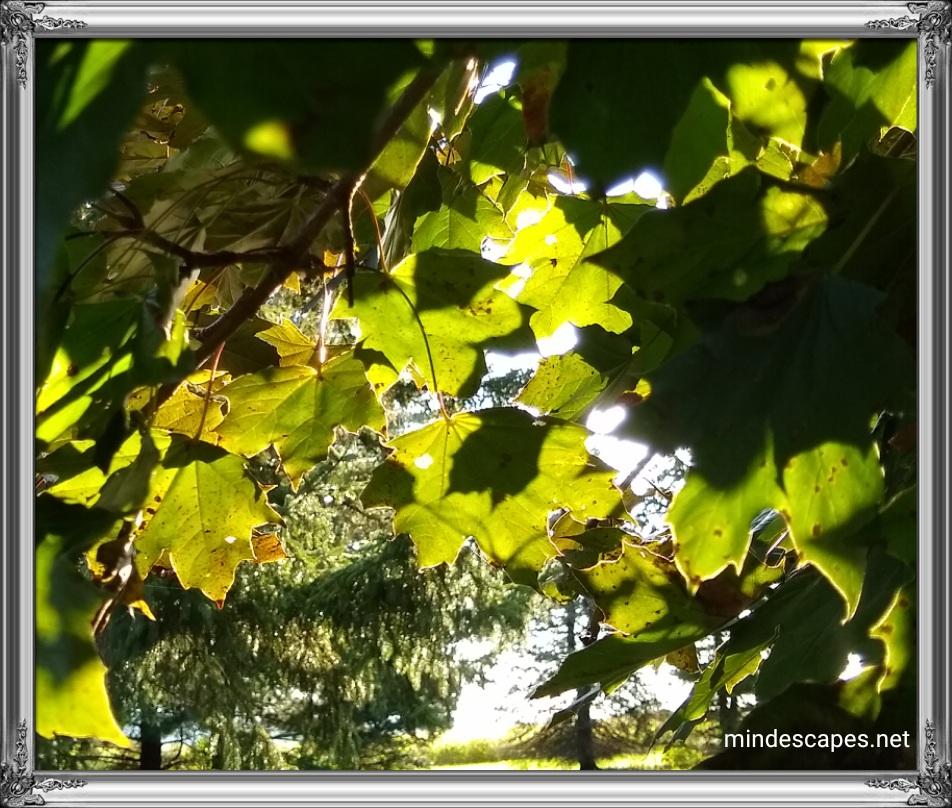 Sunlight captured through green tree leaves