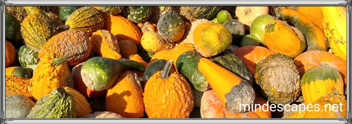 Bunch of colorful gourds