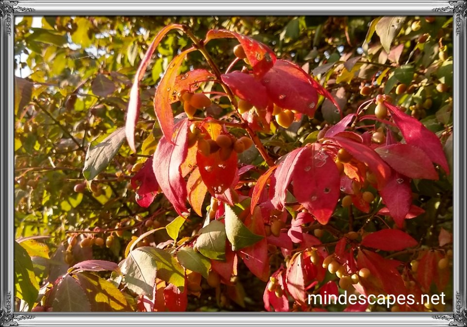 Leaves beginning to turn red