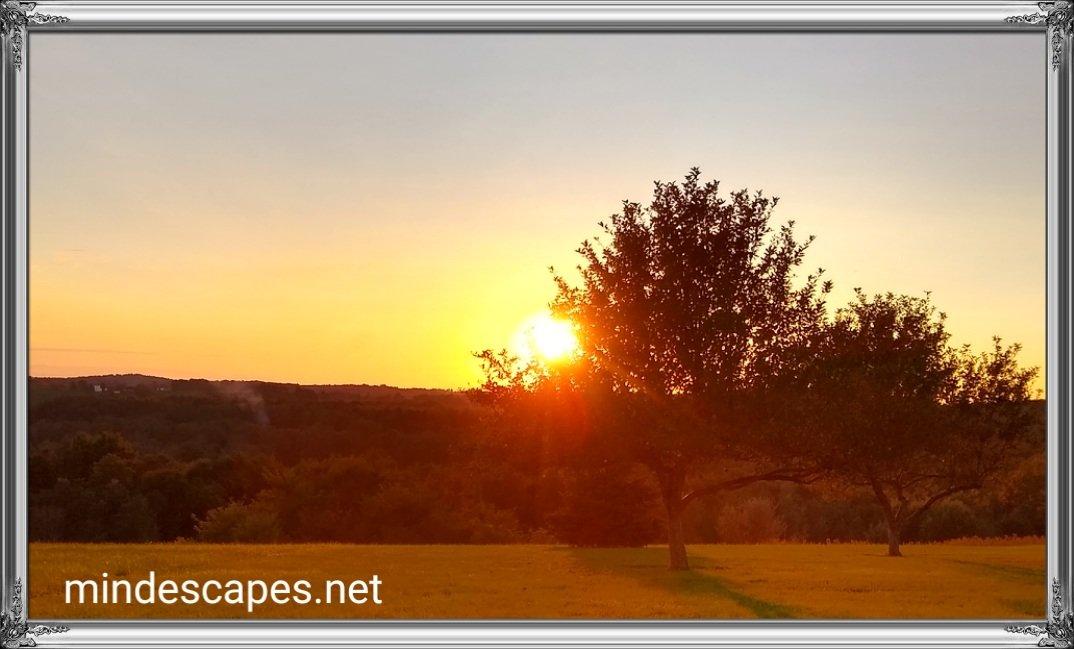 Beautiful sun setting behind a tree