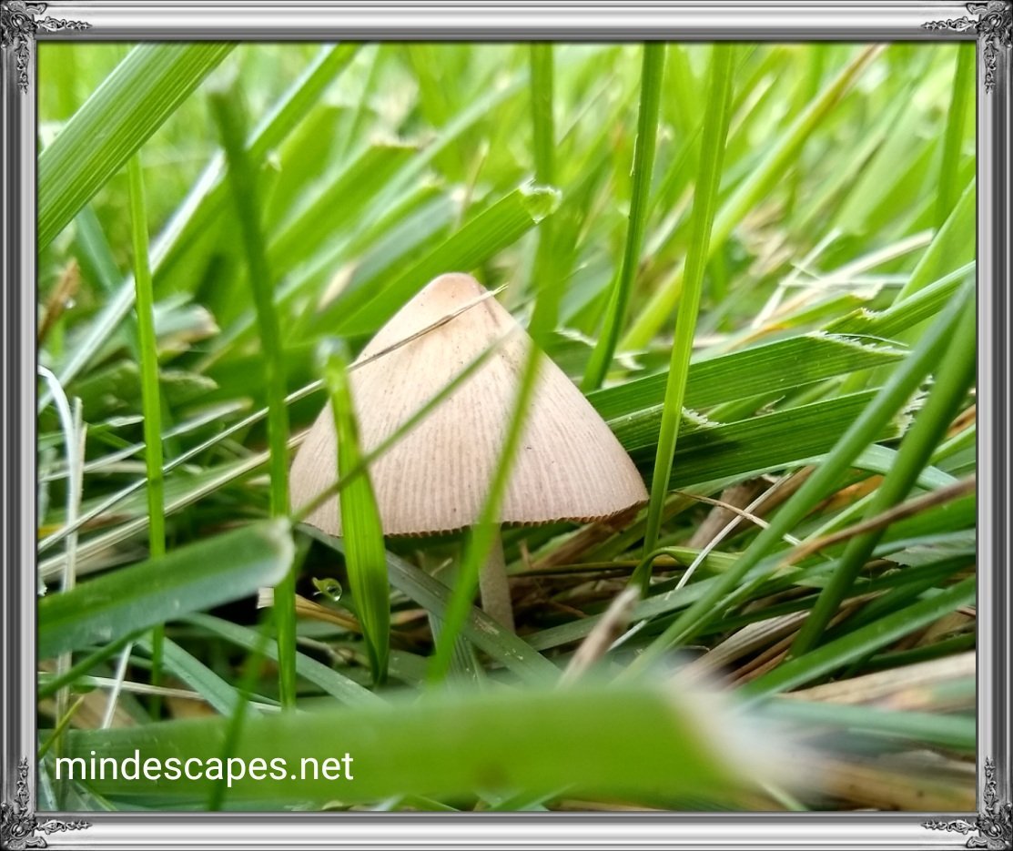 Toadstool in the grass looks like a hut in the jungle