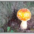 Orange dome shaped toadstool near a pine tree trunk