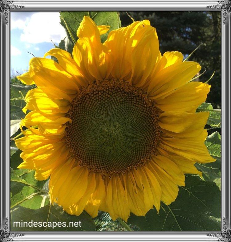 someflower0920194107140960998487496.jpg