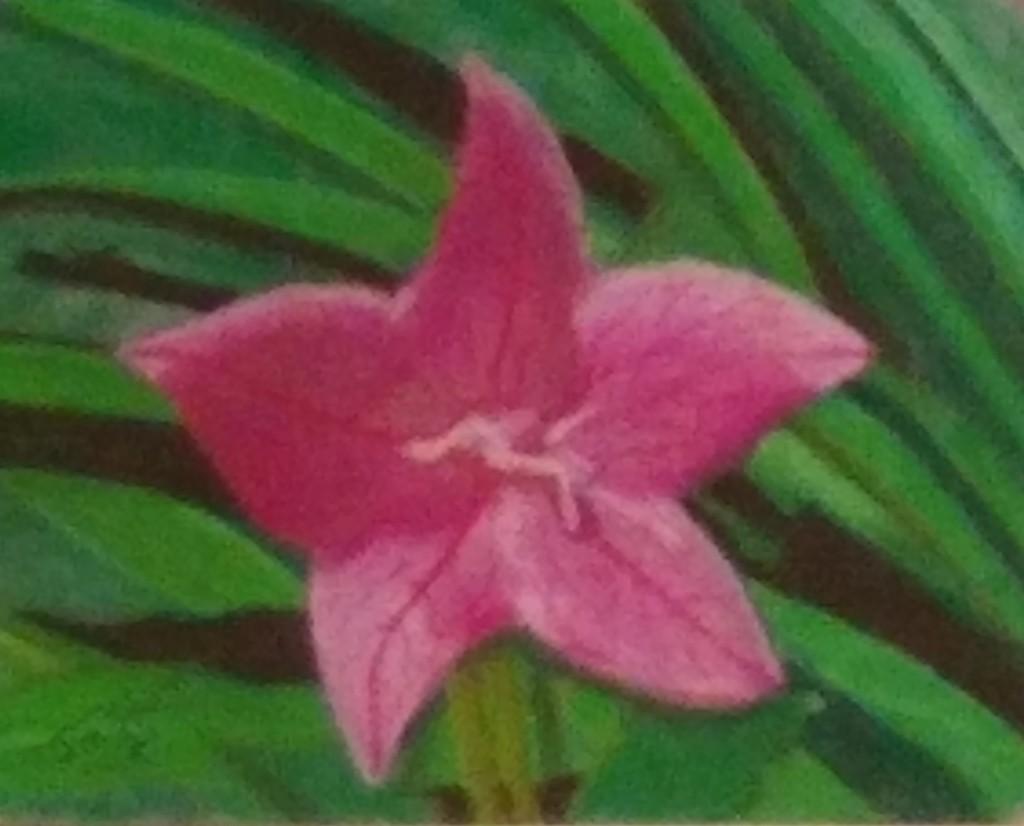 Pink 5 petal flower