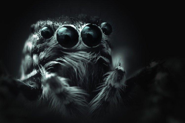 spider-bouncing-4449407_12801634653831233166970.jpg